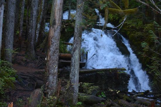 Mount Hood National Forest: Zigzag falls