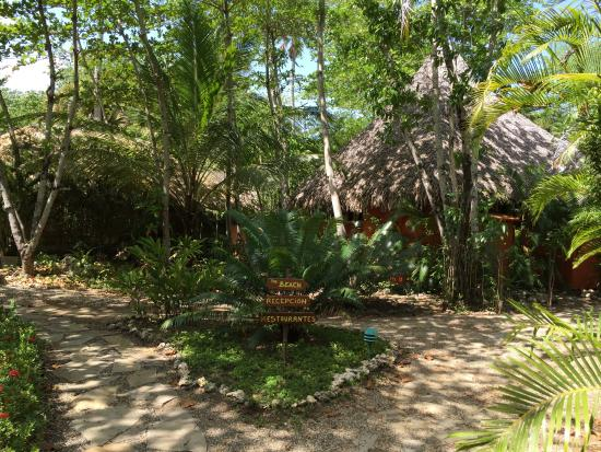 At the crossroads - Picture of Natura Cabana Spa, Cabarete ...