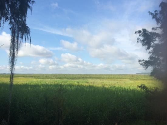 Kissimmee, FL: View of the Everglades from the centre.