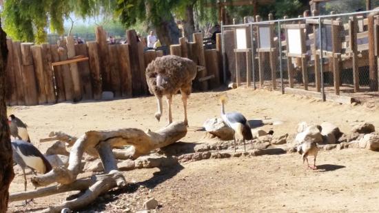 Litchfield Park, AZ: Get close to an ostrich!
