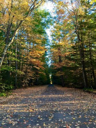 Beautiful Fall pic of a road next to Lake Chocorua