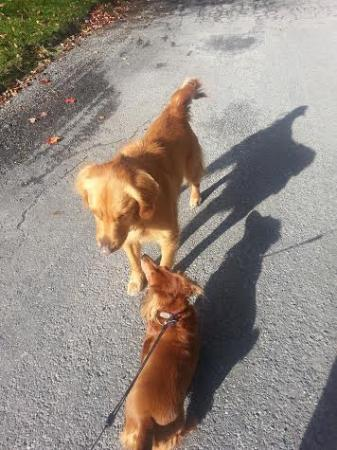Crestmont Inn : Our dog Coco making friends with Bella
