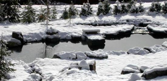 Fernie, Canadá: Back yard in the winter