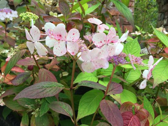 Red Barn Gallery: I loved this hydrangea