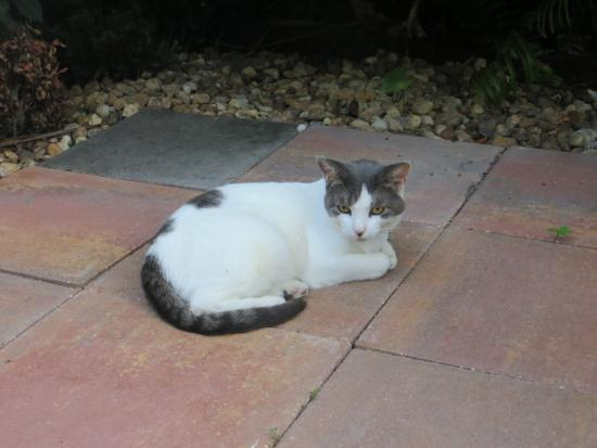 Southernmost Point Guest House: One of the resident cats!