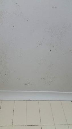 Chermside Green Motel: Mould