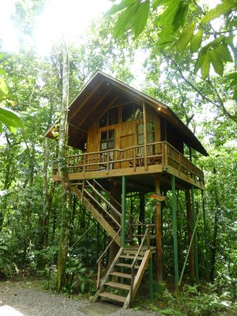 Sloth Treehouse