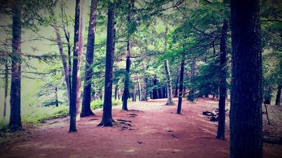 Ludington State Park: Hiking