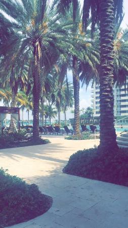 Flamingo South Beach / Calico Apartments : photo9.jpg