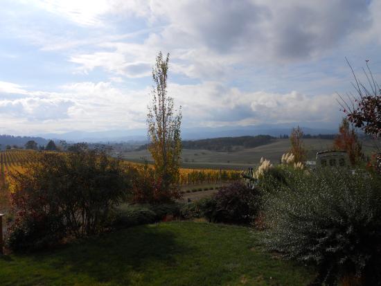 A Great Oregon Wine Tour: Beautiful Dundee vineyard view!