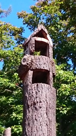 Esquimalt, Canadá: Birdhouse in tree! Made from the top of a tree that broke in a windstorm. Cool idea@