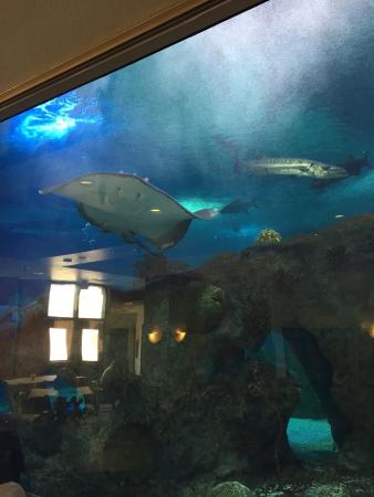 Mix Of Small Medium And Large Tanks With New Mexico Fish