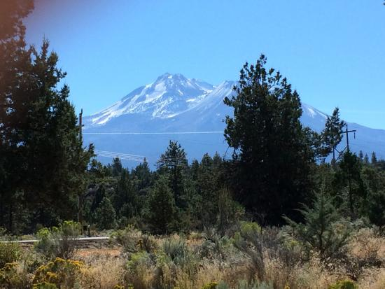 Weed, CA: Pictures of Mt Shasta with a hint of snow and deer freely roaming about.