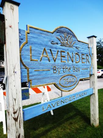 East Marion, NY: Lavender by the Bay