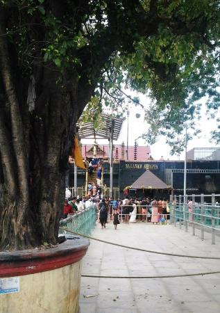 Pathanamthitta, India: behind the holy tree