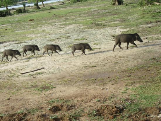 Bentota, Sri Lanka: Wee wee wee all the way home;-)