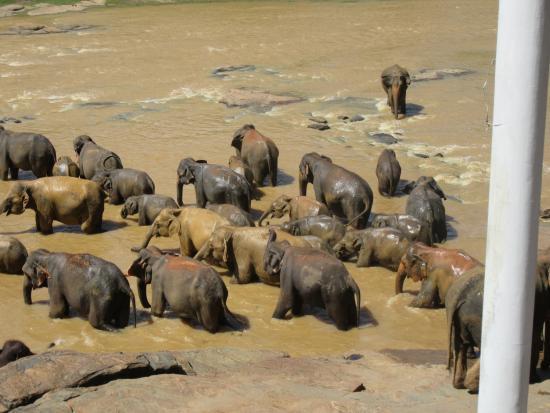 Bentota, Sri Lanka: Happy bathing beauties.