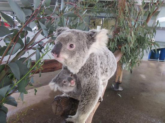 picture of cohunu koala park byford tripadvisor. Black Bedroom Furniture Sets. Home Design Ideas