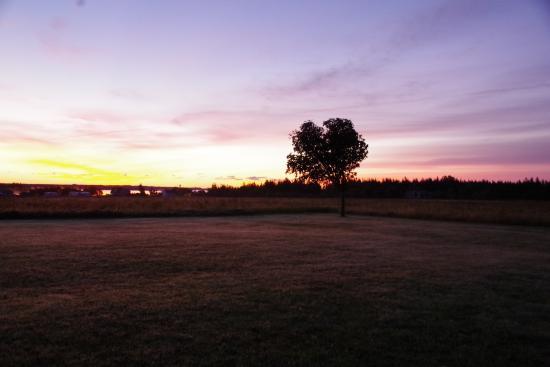 Ellerslie, Канада: 朝焼け。敷地内から。
