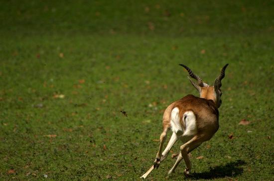 Parc de Cleres : antilope