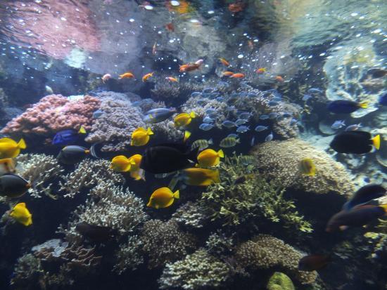 Oceanopolis: Oceanopolis