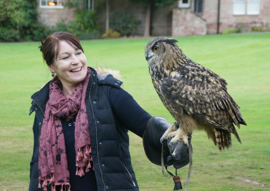 Dalhousie Castle Falconry Meeting An Owl