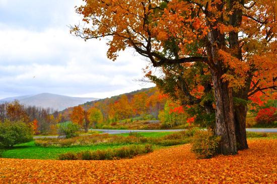 Margaretville Mountain Inn : gorgeous fall leaves right outside the property