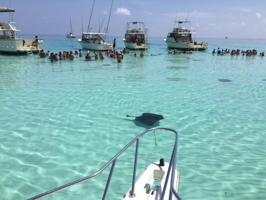 Charter Cayman: A good day !!!