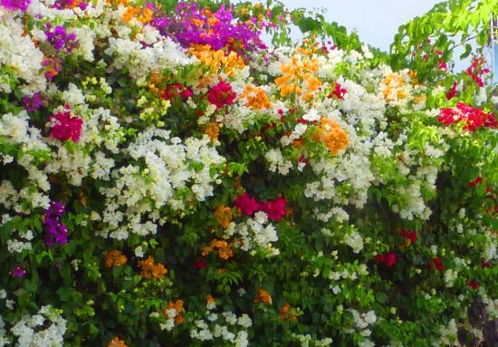 Hotel Residence Rihab : Цветы у стен  отеля