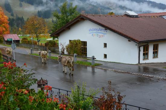 Hotel Restaurant Amadeus: Morgendlicher Besuch