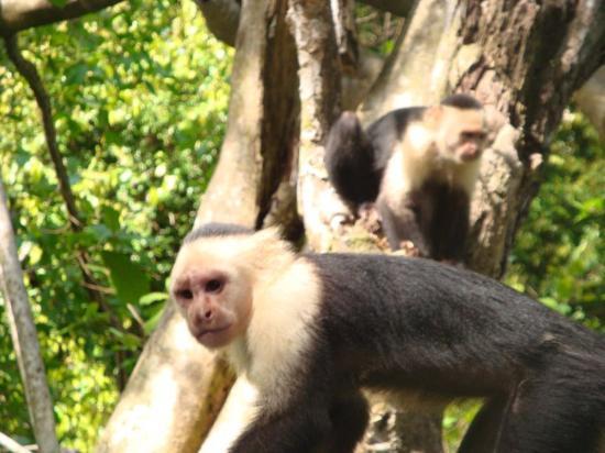 Casa Dos Rios: monos