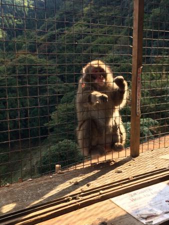 Monkey Park Iwatayama - Picture of Monkey Park Iwatayama, Kyoto - TripAdvisor