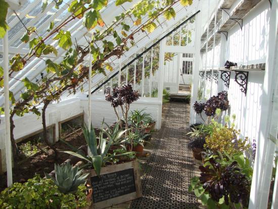 St Austell, UK: Vines