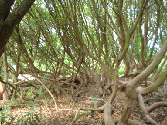 St Austell, UK: Unusual Trees