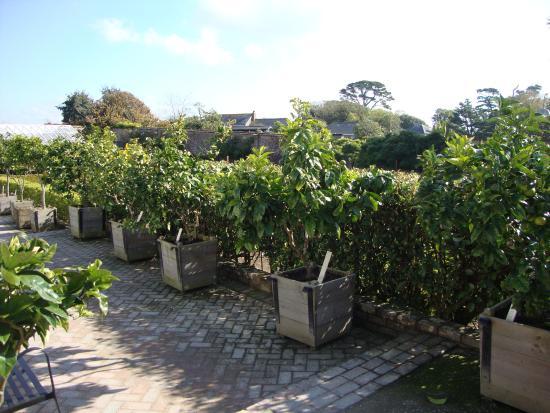 St Austell, UK: Lemon and Limes