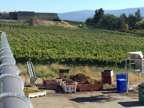 West Kelowna, แคนาดา: Volcanic Hills Estate Winery viewed from the terrace