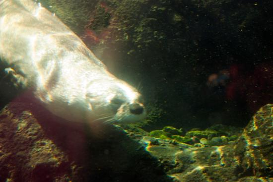 Dubuque, IA: Otter