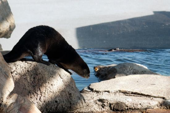 Dubuque, IA: The otters at the aquarium.