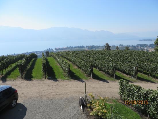 West Kelowna, Kanada: Vineyard as seen from Terrace