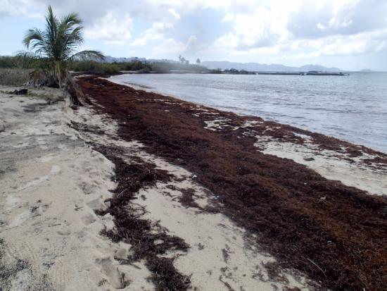 Simpson Bay, St. Maarten-St. Martin: Disgusting beach at Cove Bay