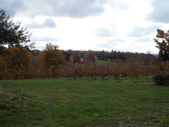 Annapolis Highland Vineyards: View from the Vineyard