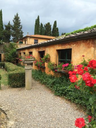 Tenuta di Ghizzano Winery 2