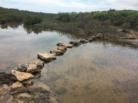 Bird Rock Point Trail-bild