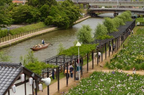 Suigo Itako Ayame Garden : 潮来あやめ園