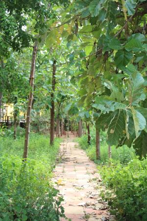 Anandadhama Retreat: Far side pathway to dining hall