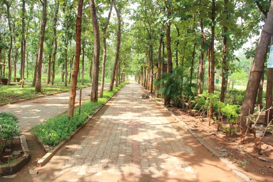 Anandadhama Retreat: Pathway lined with teak trees