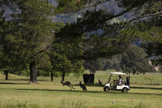 Mt Beauty Golf Club: 4
