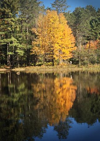 Laurens, Nowy Jork: Fall at Ice Pond 2015