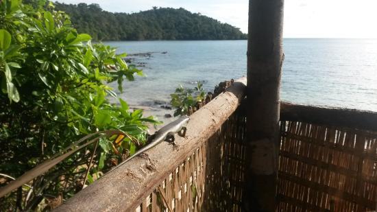 Ten103 Treehouse Bay: Blick aus meinem Baumhaus