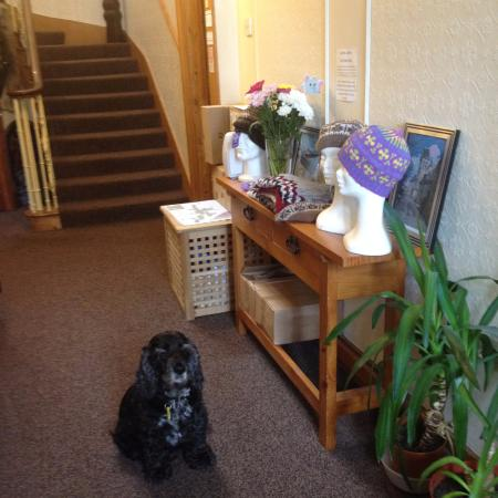 Alder Lodge Guest House: The welcoming committee
